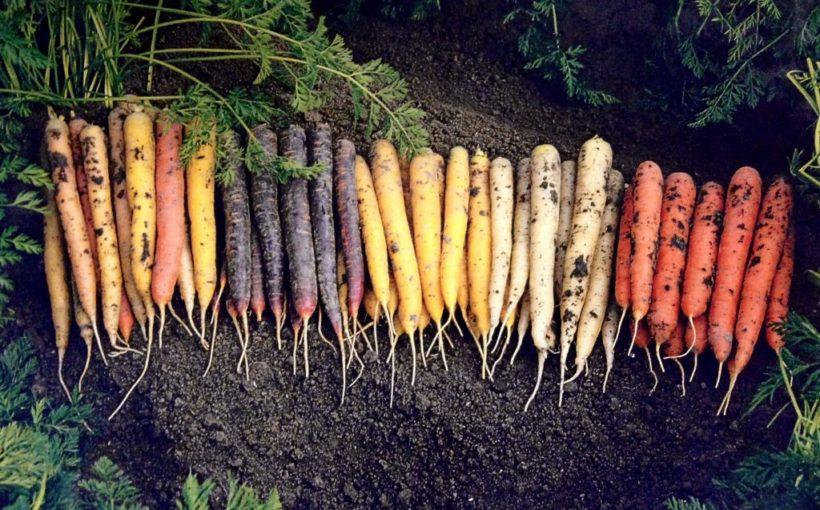 Blog-wortels-1024x642